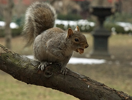 squirrel in gramercy park