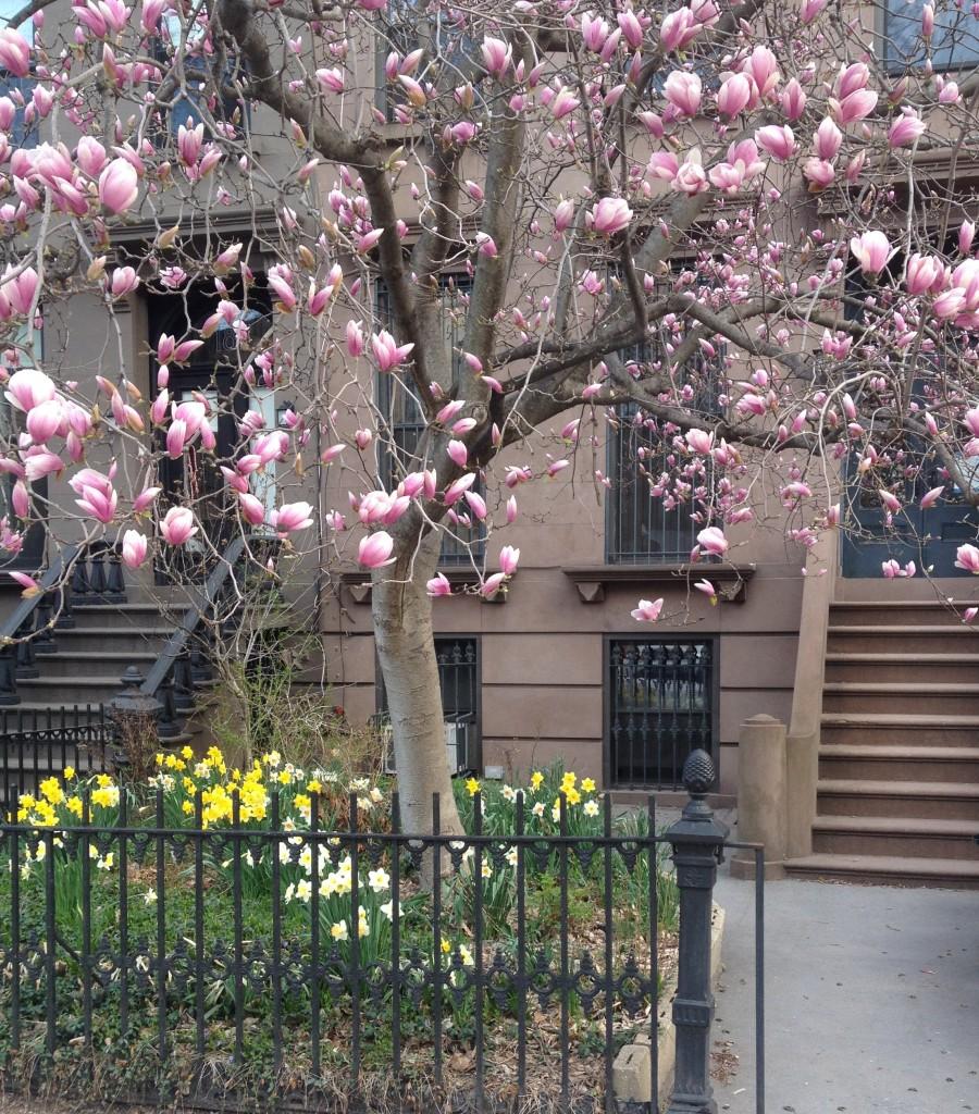 Park Place Magnolia